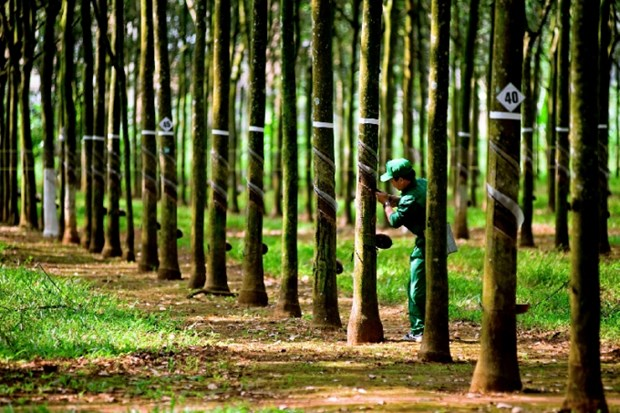 Vietnam Rubber Group posts rising revenue and profit hinh anh 1