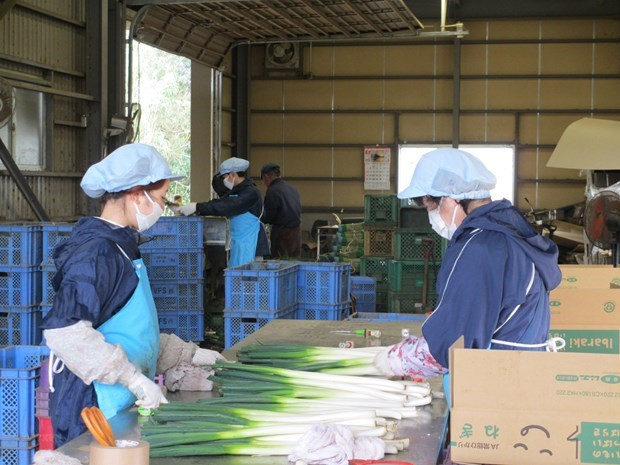 Vietnam first time surpasses China in number of labourers working in Japan hinh anh 1