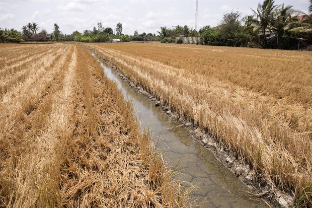 Water shortages, climate change linked to saline intrusion in Mekong Delta hinh anh 1
