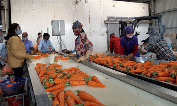 Efforts made to promote sale of crops in virus-hit provinces hinh anh 1