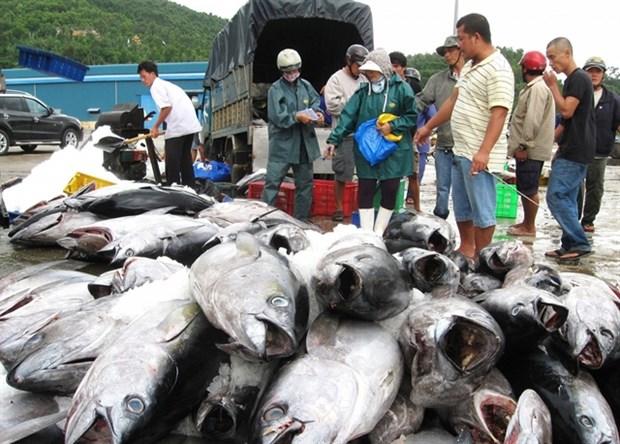 Vietnam's tuna exports to US increase hinh anh 1