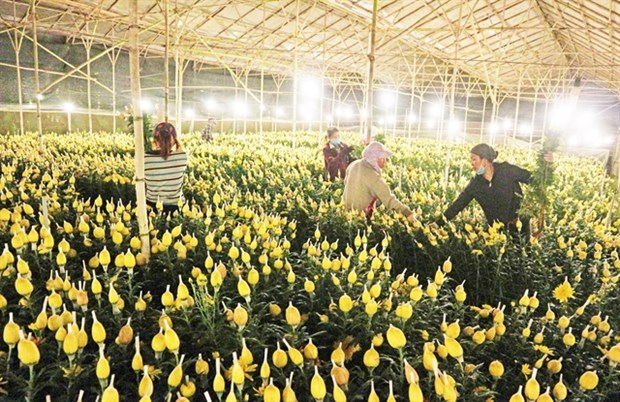 Flower growers look to online sales amid COVID-19 resurgence hinh anh 1