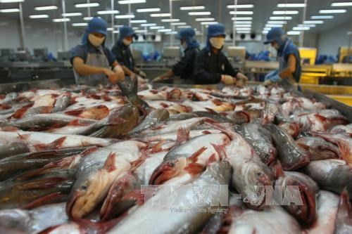 Cambodia to resume farmed fish import from Vietnam hinh anh 1