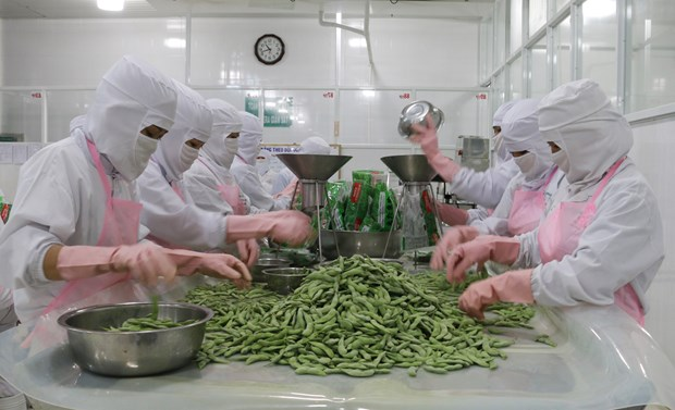 Agriculture minister views export target of 44 bln USD as feasible hinh anh 1
