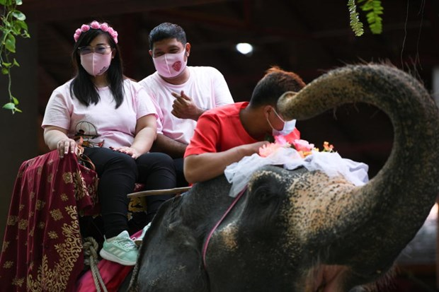 Thailand: couples tie the knot on elephants on Valentine's Day hinh anh 1