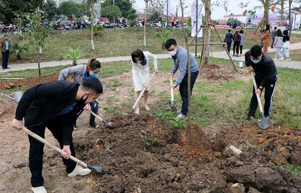 Provinces launch tree planting festival to support 1 billion tree programme hinh anh 1