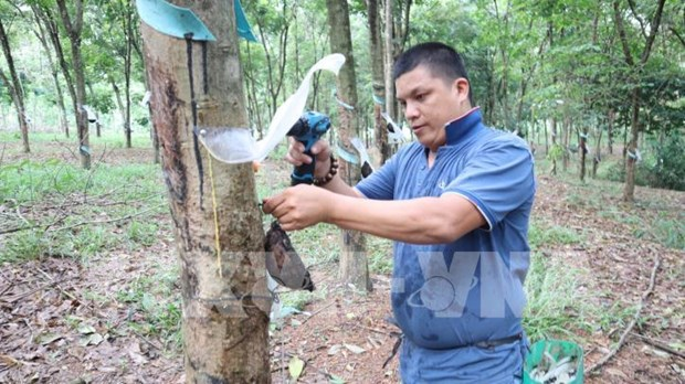 Vietnam Rubber Group to raise natural rubber output under its own brand hinh anh 1