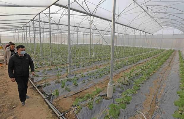 High-tech farming needs investment and proper policies hinh anh 1