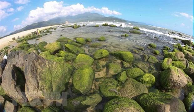Nam O Reef, the green pearl of Da Nang hinh anh 1