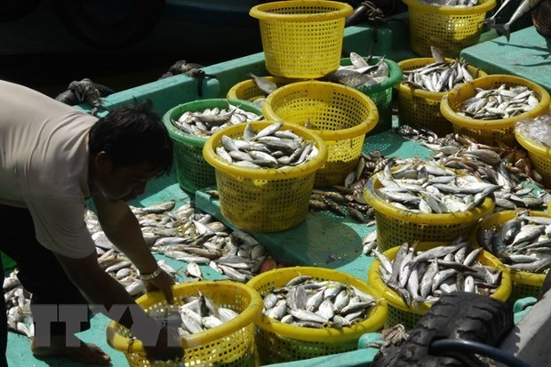 Kien Giang: 12.7 trillion VND for marine aquaculture hinh anh 1