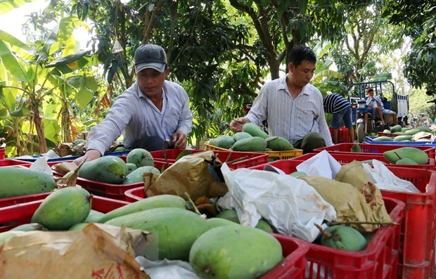 Trade surplus from agro-forestry-fisheries hit 1.37 billion USD in two months hinh anh 1