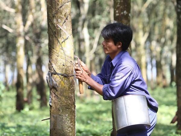 Rubber companies set lower profit targets for 2021 hinh anh 1