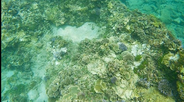 Tour guides form team to save coral off coast of Binh Thuan hinh anh 1