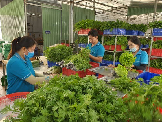Agricultural cooperatives benefit hugely from investment in technology: experts hinh anh 1