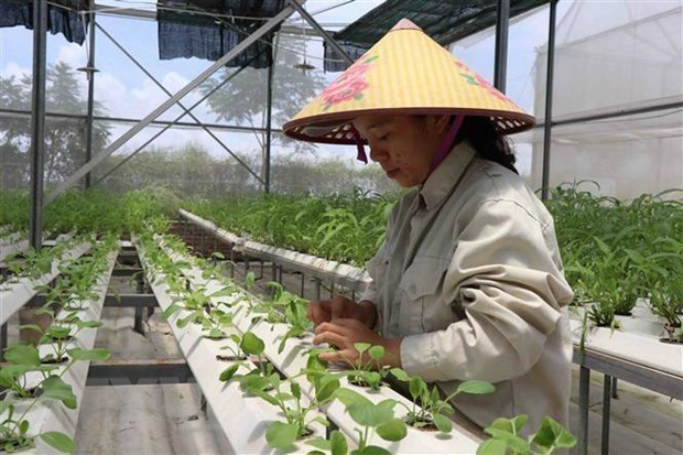 Bac Giang province to raise contribution of hi-tech agriculture hinh anh 1