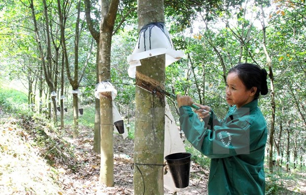 Rubber exports rocket in two months hinh anh 1