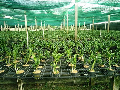 HCM City set to become high-quality agriculture hub by 2030 hinh anh 1