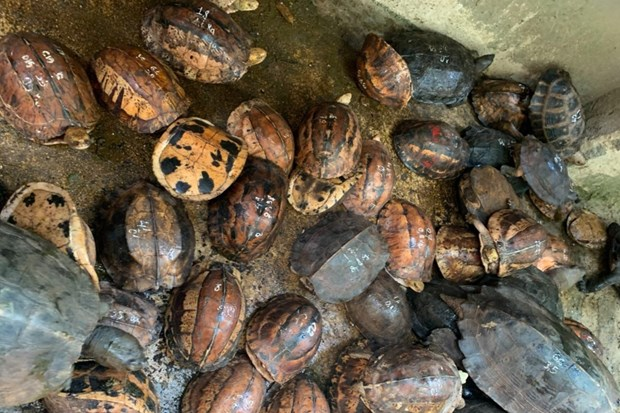 Seller of rare turtles jailed for 10 years hinh anh 1