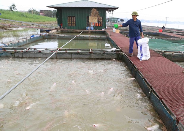 Long An targets at least 60,000 tonnes of aquaculture production hinh anh 1