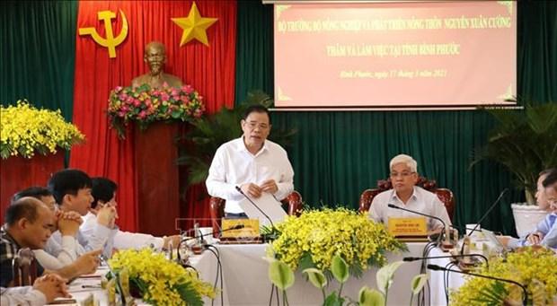 Binh Phuoc urged to develop cashews as main crops hinh anh 2