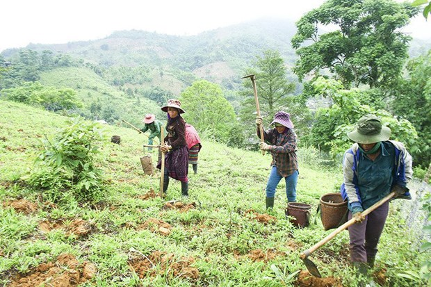 CARE International helps ethnic minorities in Ha Giang hinh anh 1