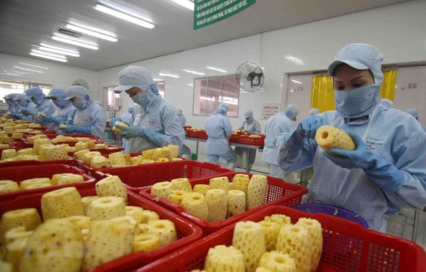Vietnam targets 10 billion USD from fruit, vegetable exports by 2030 hinh anh 1