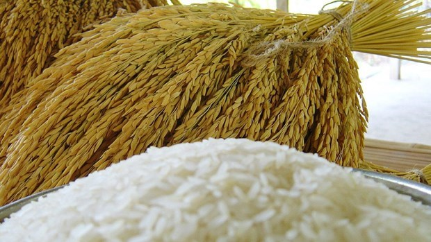 Thailand eyes exports of 6 million tonnes of rice in 2021 hinh anh 1