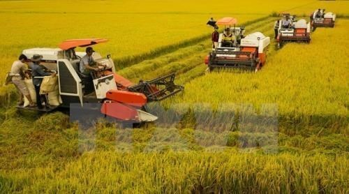 Vietnam aims to reduce greenhouse gas emissions in rice sector hinh anh 1