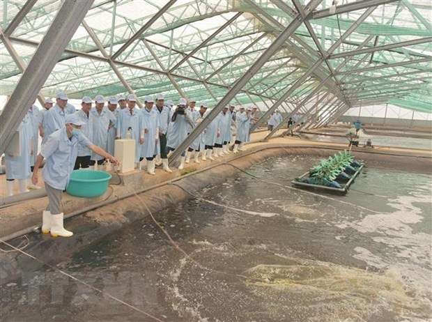 Bac Lieu strives to become national shrimp industry's centre hinh anh 1