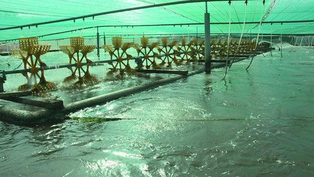 Bac Lieu strives to become national shrimp industry's centre hinh anh 2