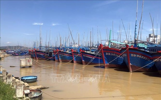 Binh Dinh: All fishing ships must obtain food safety certificates by end of June hinh anh 1