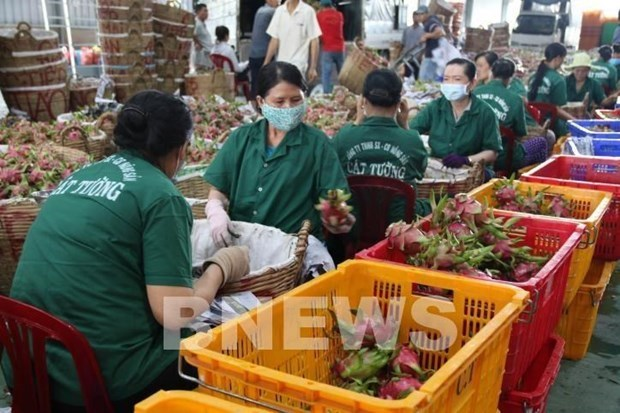 Fruit, vegetable exports bounce back in Q1 hinh anh 1