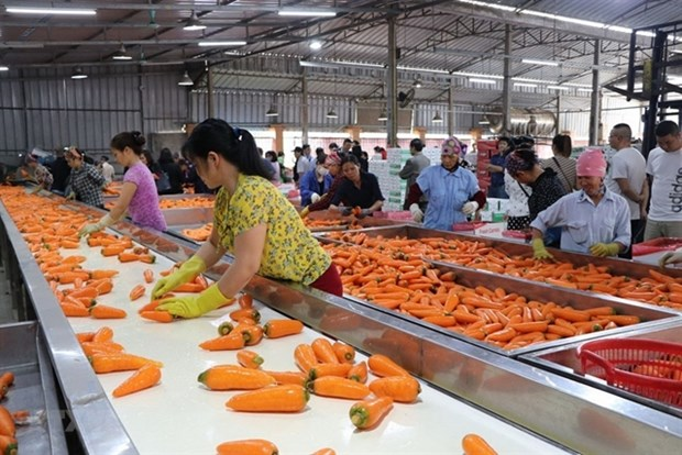 Agriculture sector needs to develop raw materials: experts hinh anh 1