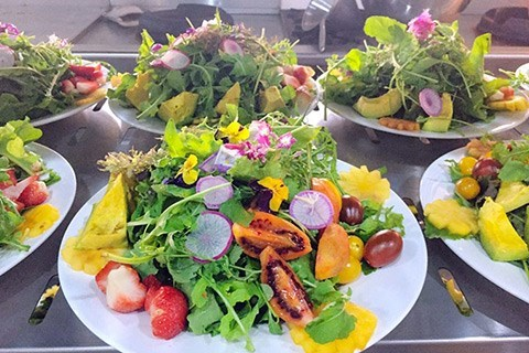 Da Lat culinary contest prepares a record 100 dishes from local ingredients hinh anh 1