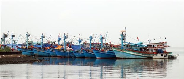 Kien Giang making every effort to fight IUU fishing hinh anh 1