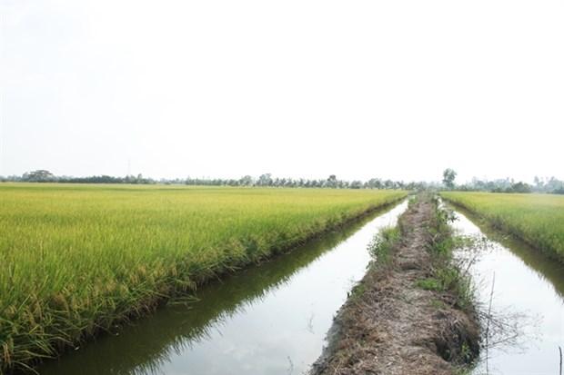 High-tech shrimp farming brings high profits in Bac Lieu province hinh anh 1