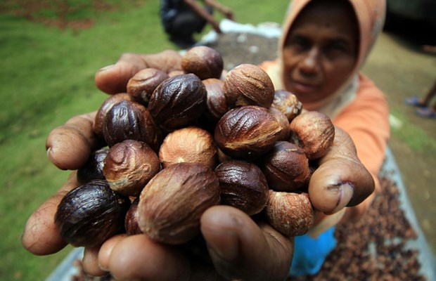 Indonesia seeks to boost spice exports to EU hinh anh 1