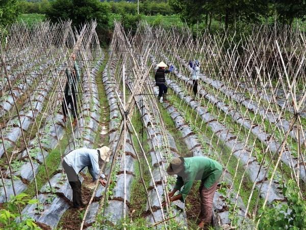 Le Vietnam esquisse un plan pour développer une économie collective et des coopératives Heinh Anh 1