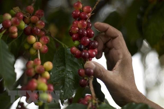 Webinar discusses way to promote Vietnam – Venezuela trade hinh anh 1