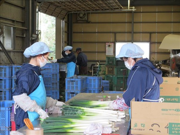 Shortage of workers in Japan under discussions hinh anh 1
