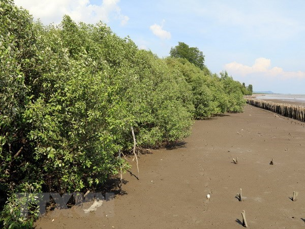 Kien Giang working hard to conserve forests, improve livelihoods of coastal residents hinh anh 1