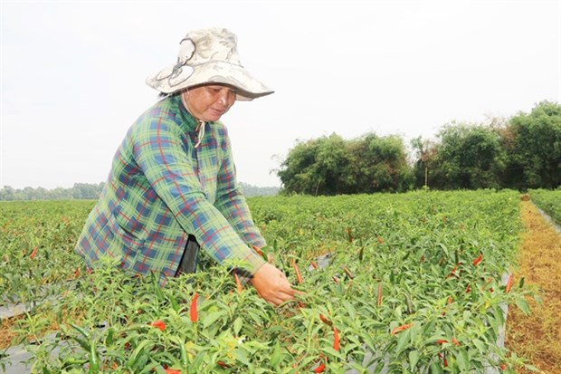 Tra Vinh eyes makeover of agriculture with advanced techniques, restructure hinh anh 1