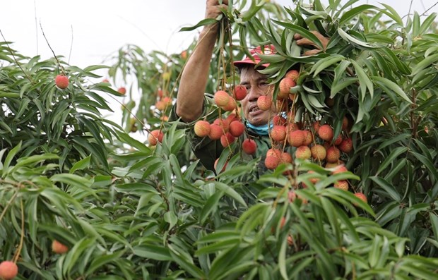 Conference aims to boost consumption of Hai Duong farm produce amid COVID-19 hinh anh 1