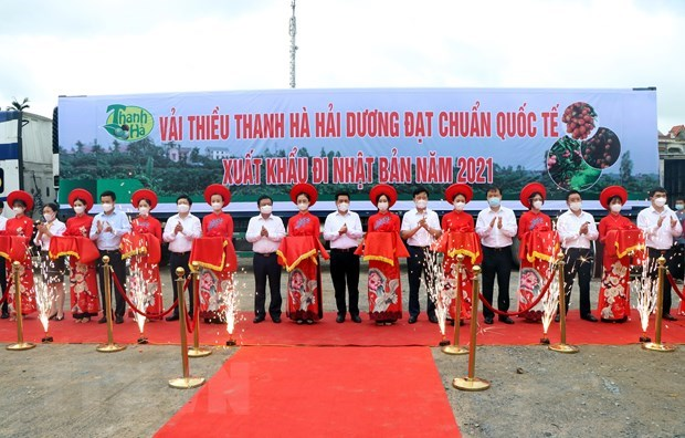 Lychee harvest season gets underway in Hai Duong hinh anh 1