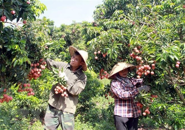 Conference to seek ways for boosting farm produce export to Japan hinh anh 1