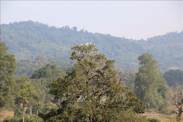 Localities urged to announce forest status in 2020 hinh anh 1