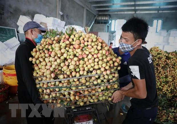 PM orders removing difficulties in farm produce consumption for Bac Giang hinh anh 1