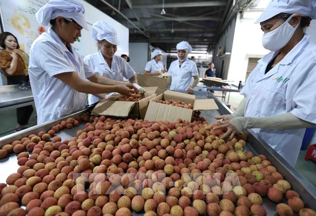 Export turnover grows 30.7 percent in five months hinh anh 1
