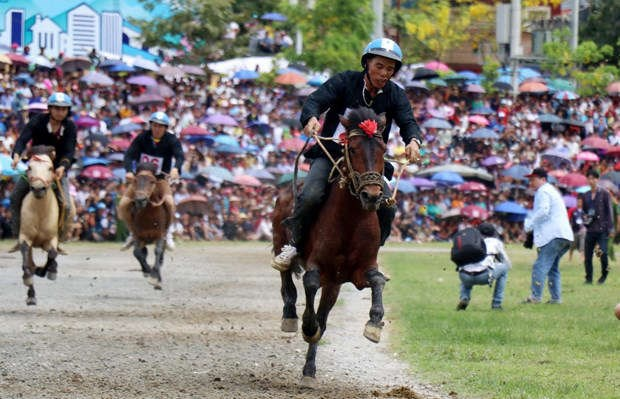 Traditional horse race recognised as national intangible heritage hinh anh 1