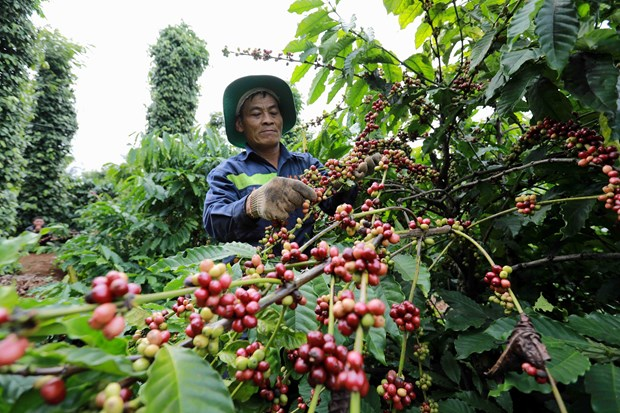 Winners of Vietnam Specialty Coffee Competition announced hinh anh 1